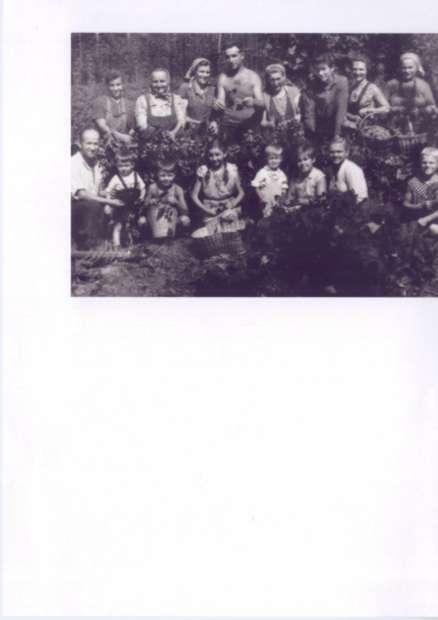obiranje hmelja 1950