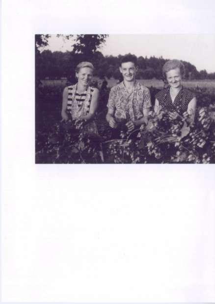 Obiranje 1953
