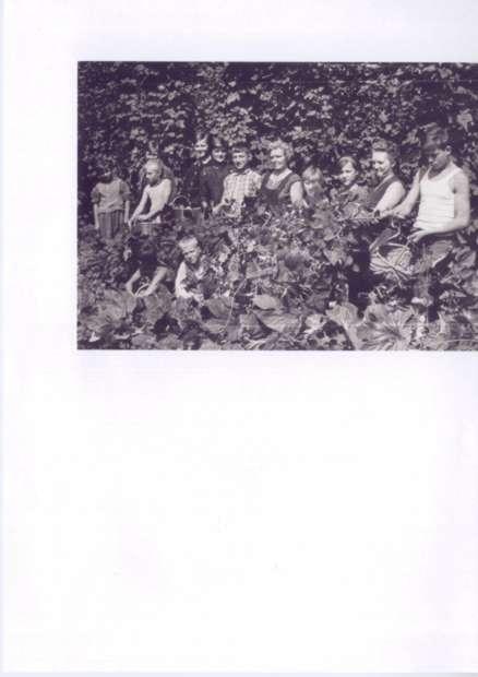 Obiranje 1961
