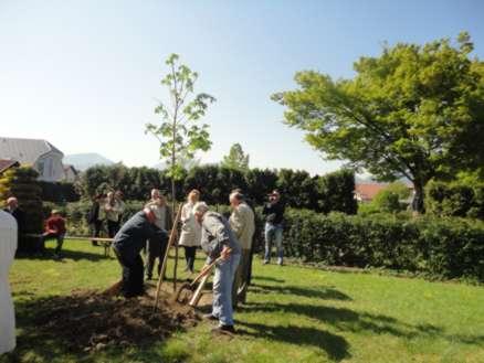 zasaditev drevesa častni člani