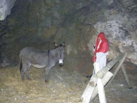 Osliček v jami